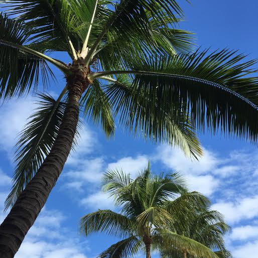 worth avenue, what to do in palm beach