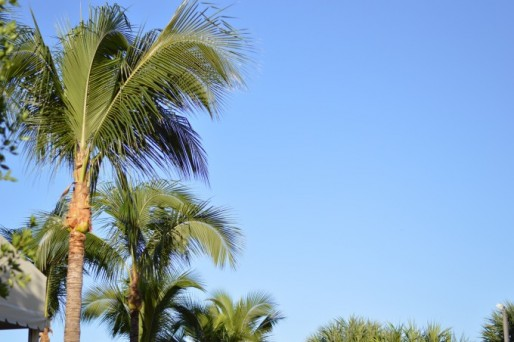 palm beach recap, palm beach scenery
