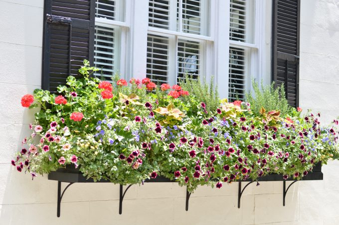 travel guide Charleston, window boxes