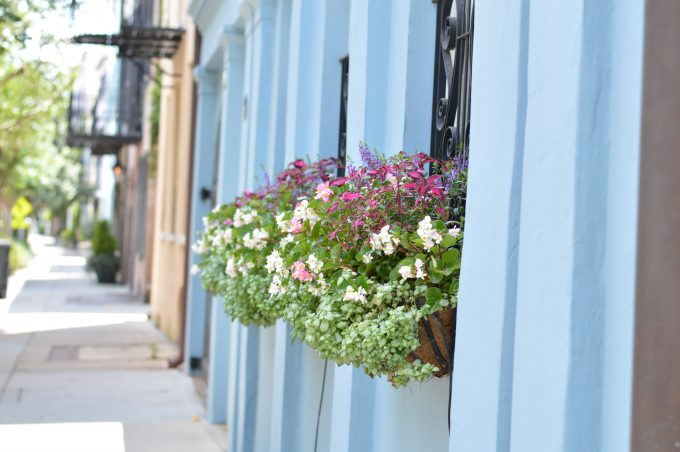 rainbow row Charleston, window boxes wit flowers