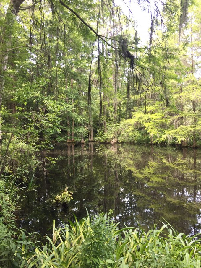 Middleton Place plantation, Charleston plantation, what to do in Charleston