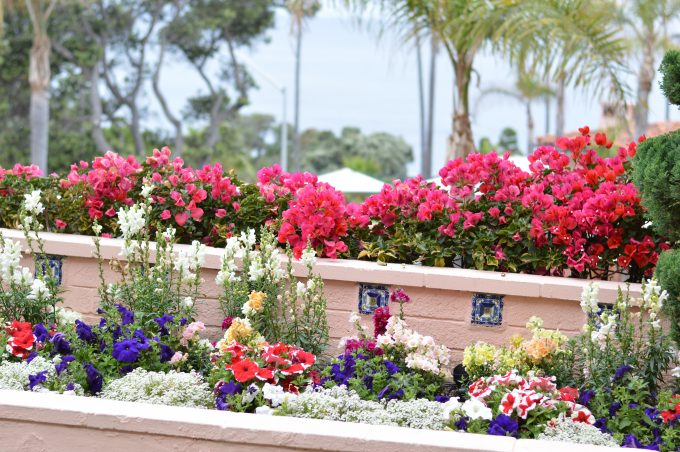 colorful summer flowers, la valencia hotel, la jolla hotel, destination wedding venue