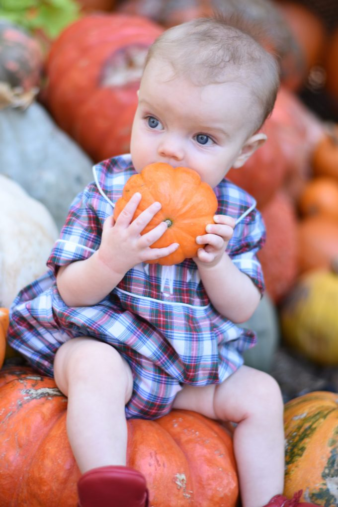 baby holding a mini pumpkin up to his mouth