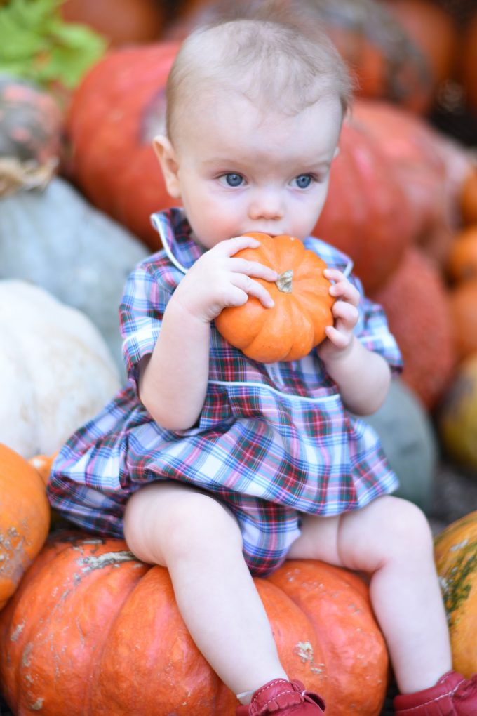 baby sitting on a pumpkin holding a mini pumpkin up to his mouth