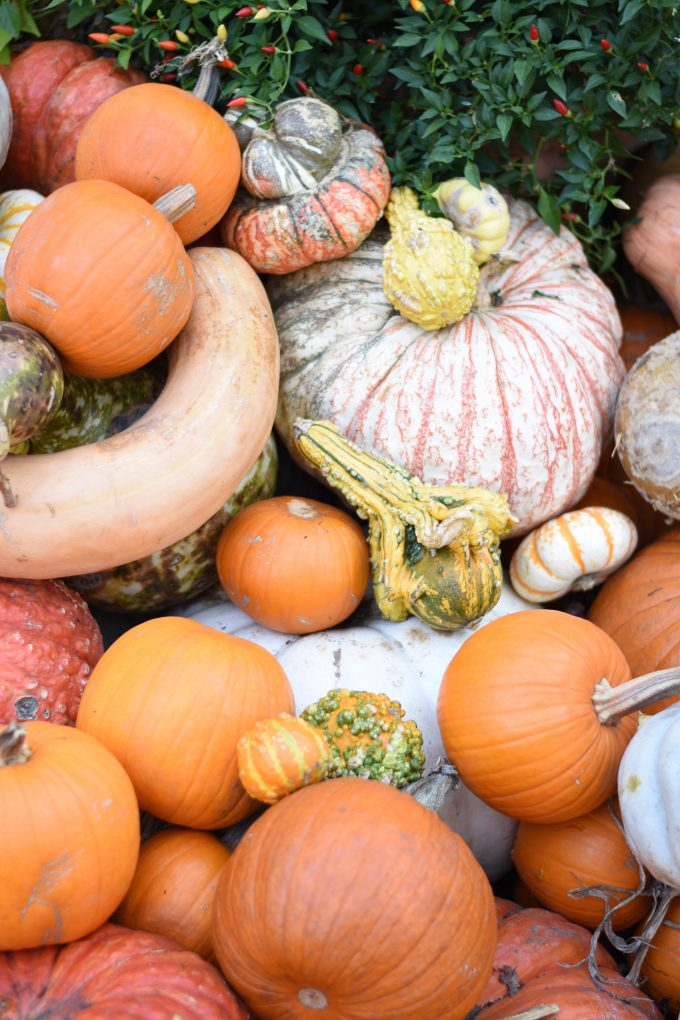 assorted pupkins and gourds