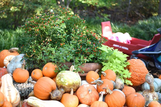 a red wagon at the pumpkin patch