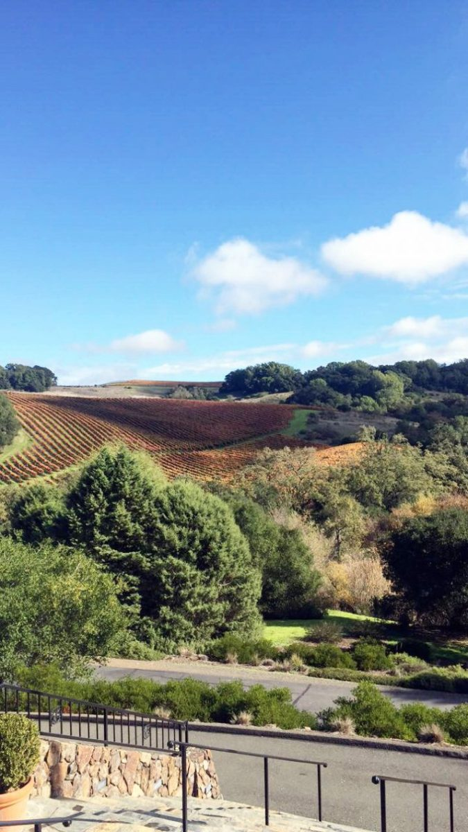 |views from the chalk hill tasting|
