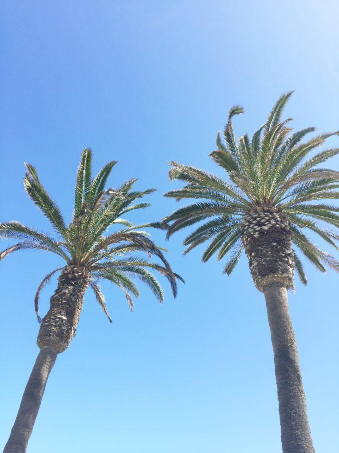 palm trees del mar CA