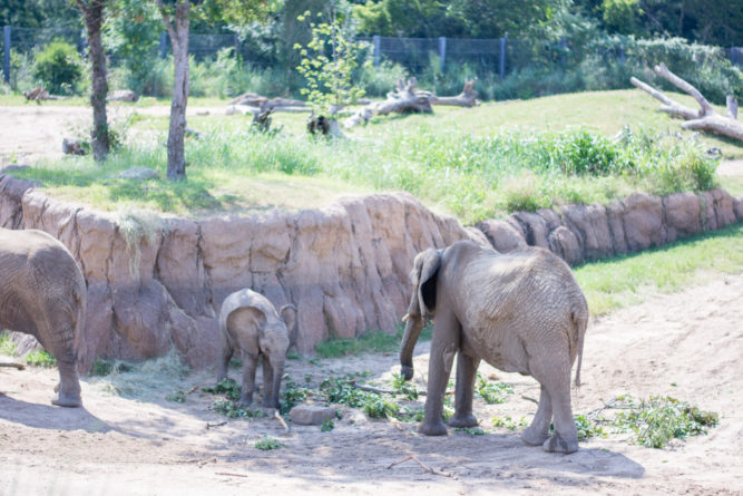 mother elephant and baby at the zoo