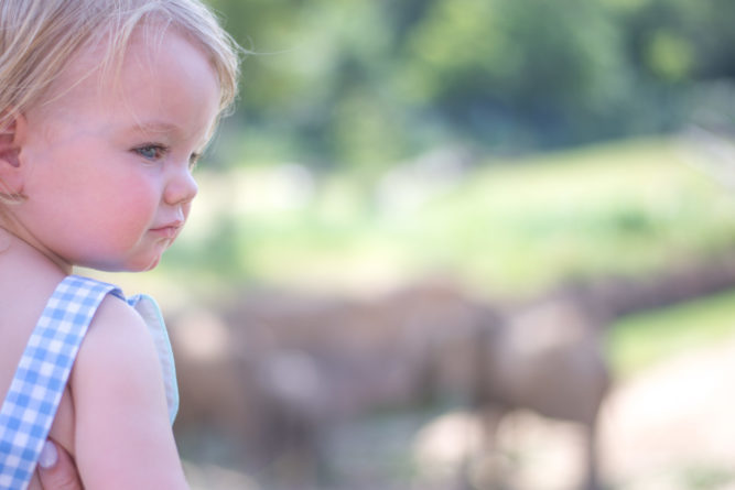 baby looking at elephants at the zoo