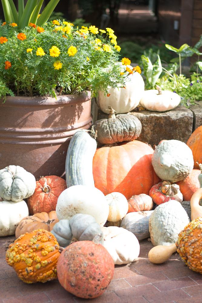 favorite fall activity in dallas pumpkin varieties