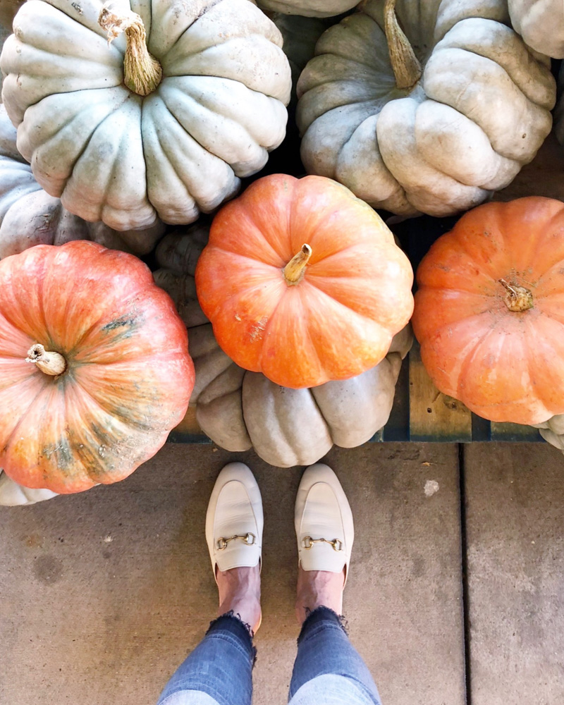 october in review heirlom pumpkins