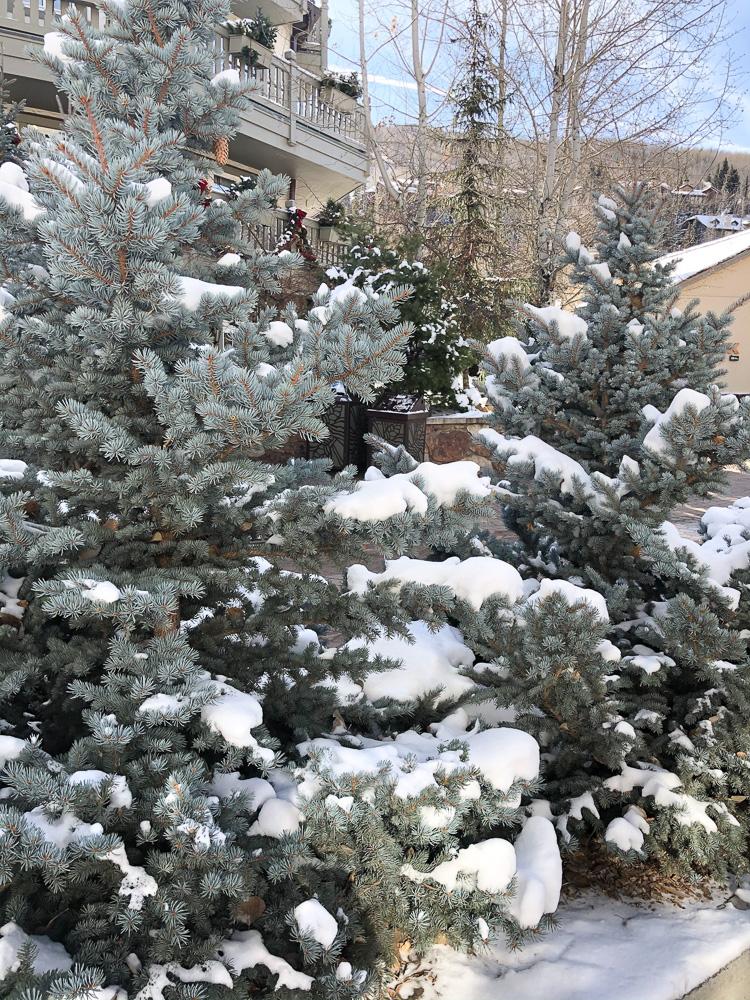 snowy landscape vail
